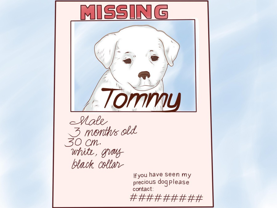 Dog Haus Pet Sitting Animal Control LOST pet – Make a Missing Poster